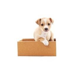 Puppy Box - Stenaci balicek