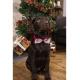 Vianočna mašlička pre psika či mačku