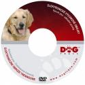 DVD výcvik psa